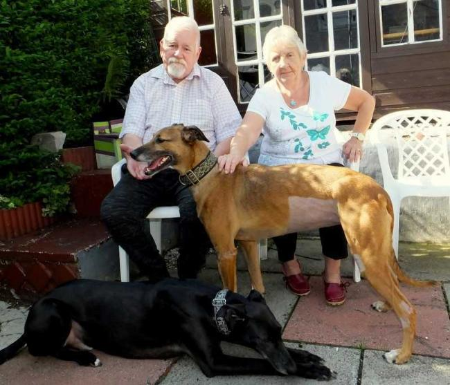 Poppy with her foster family, Brian,his wife Sadie and their own dog Diesel. Picture by Lesley Roberts