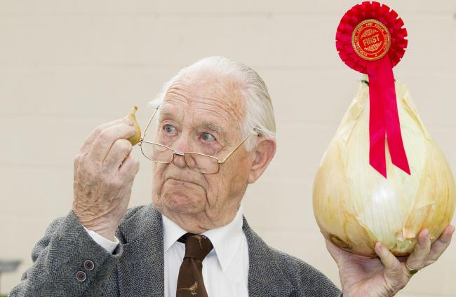 John Carson inspects a small onion and first prize giant onion at the Strathclyde Leek and Onion Society Show at Cardwell Garden Centre, Gournock. Sept 25 2106