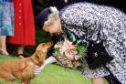 The Queen and a corgi (Pool Photo)
